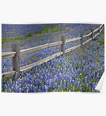 Bluebonnets and an Old Wooden Fence in the Texas Hill Country 1 Poster