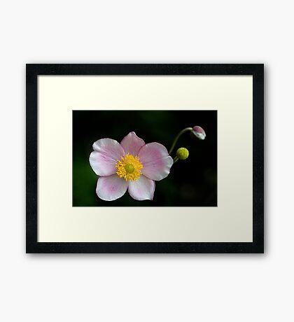 Japanese Simplicity Framed Print