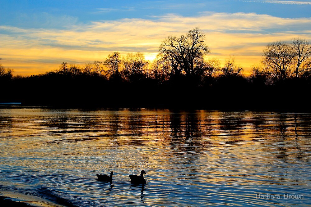 Evening on the American River by Barbara  Brown