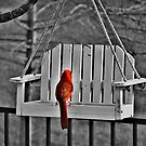 Just a little red by Caren