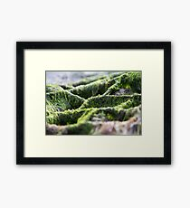 Seaweed Texture Framed Print