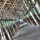 Folly Pier by aikidawg