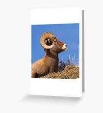 Big Horn Sheep Ram Greeting Card