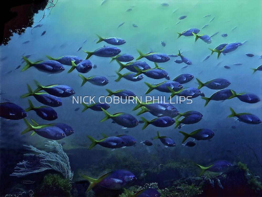 BLUE SEASONS by NICK COBURN PHILLIPS