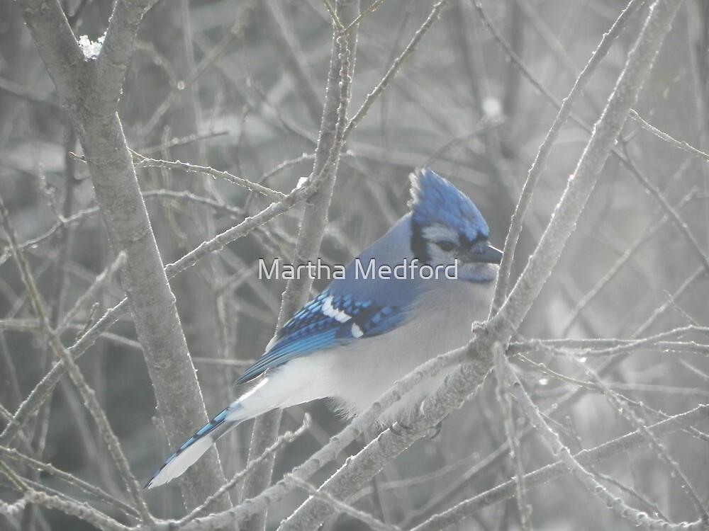 Winter Jay by Martha Medford