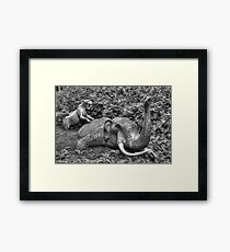 Mammoth and Sabre Toothed Tiger Framed Print