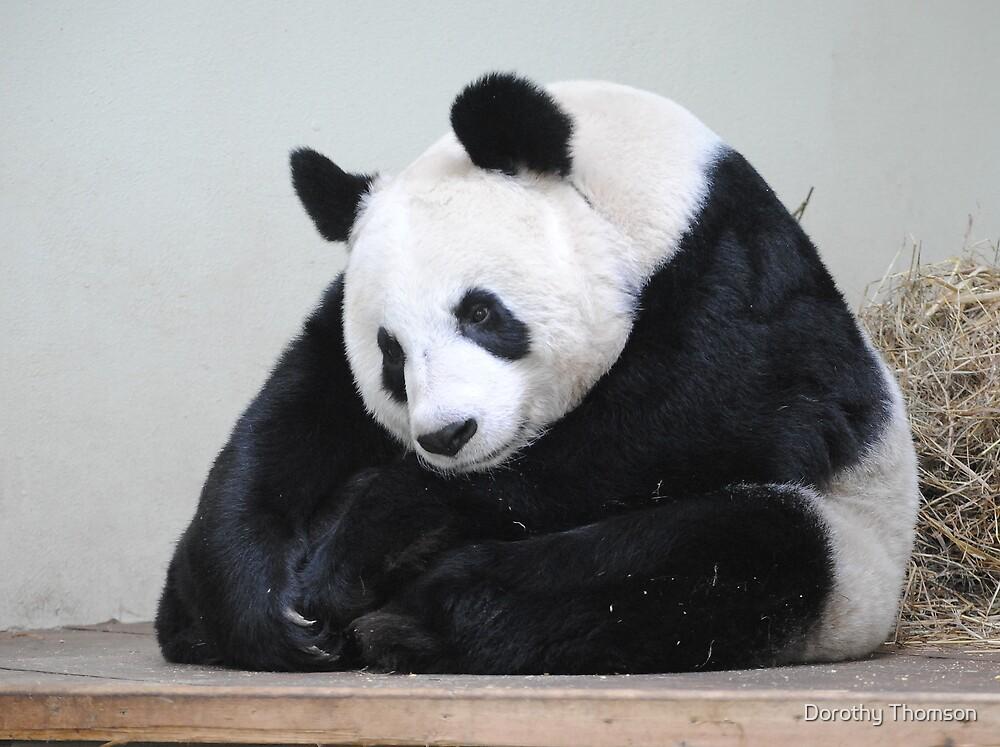 Tian Tian.........Buddha Panda. by Dorothy Thomson