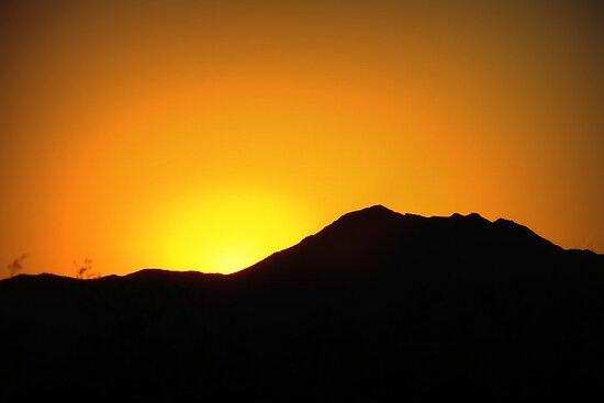 Morning Glory in Marana by Kimberly Chadwick