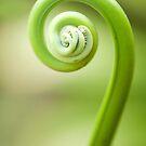 Koru - fern frond by Jenny Dean