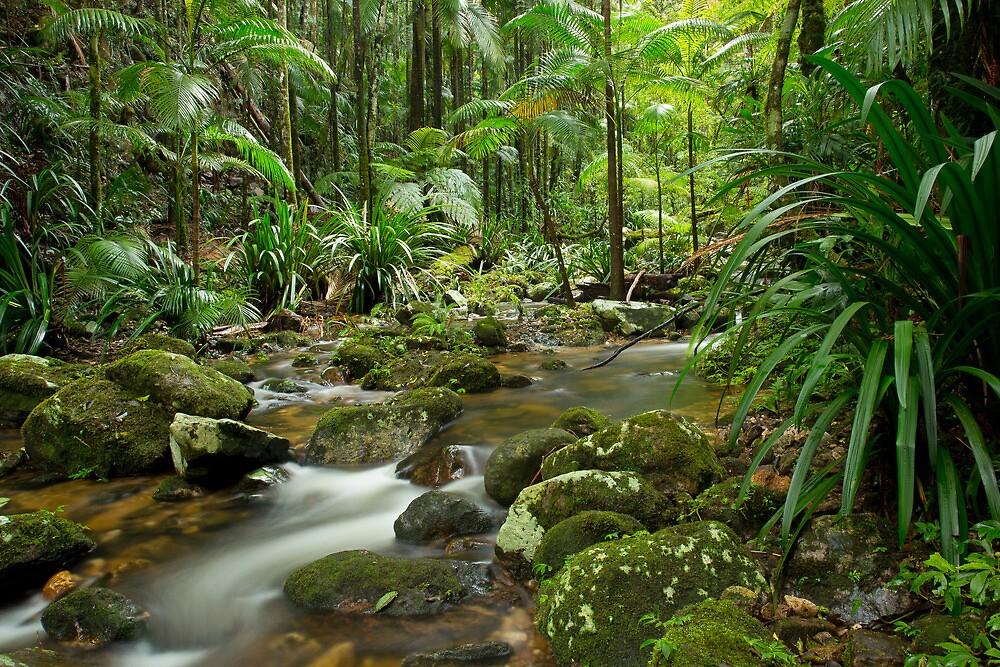 Tropical Beauty by Cameron B
