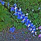 Sun Kissed Blue Petals by Jane Neill-Hancock