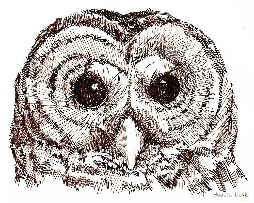Sepia Owl by Heather Davis
