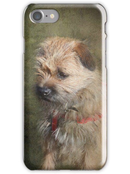 Border Terrier iPhone/iPod Case by Carol Bleasdale