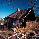 Termites? by Jim Haley