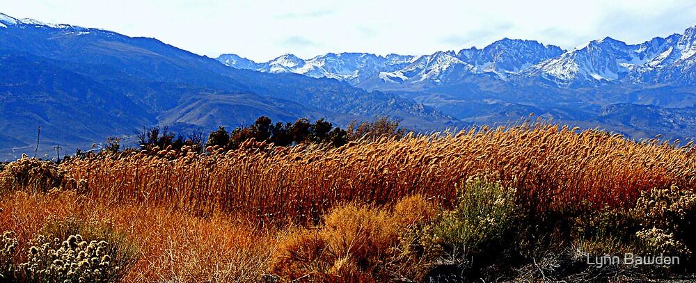 """""""High Sierra Grass"""" by Lynn Bawden"""