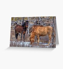 Furry Colts Greeting Card