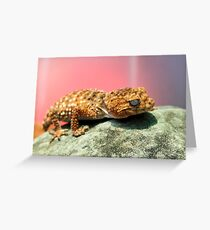 Knob Tailed Gecko Lizard Greeting Card
