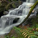The Ferns By Flood by peter  jackson