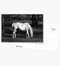 Arab Swoosh Postcards