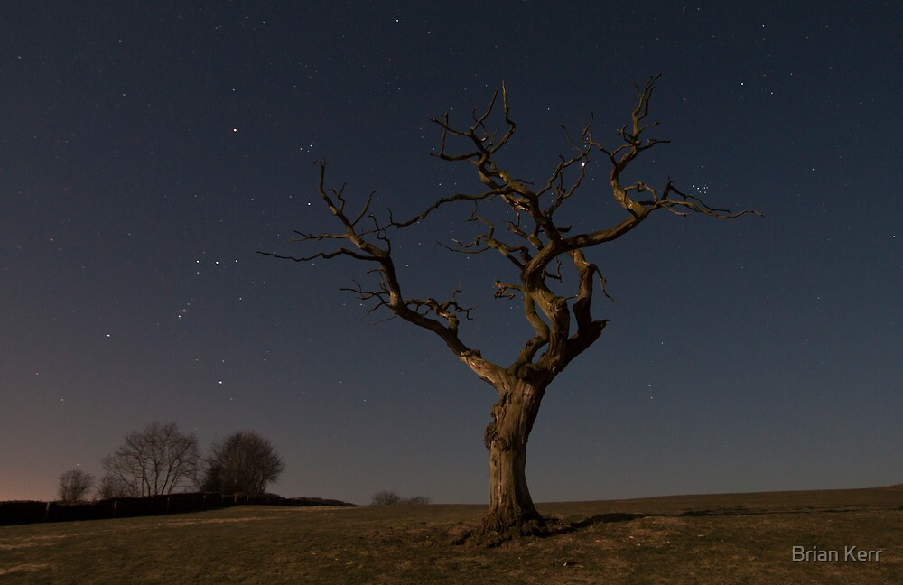 The Tree At Night by Brian Kerr
