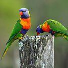 Rainbow Lorikeets. Brisbane, Queensland, Australia. (2) by Ralph de Zilva