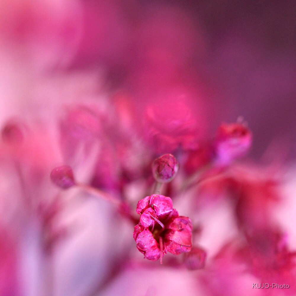 Pink Phantasy by KUJO-Photo