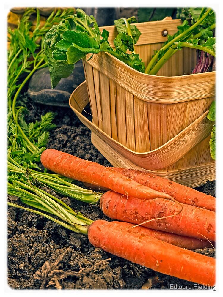 Fresh Garden Vegetables by Edward Fielding
