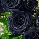 black rose by clayton  jordan