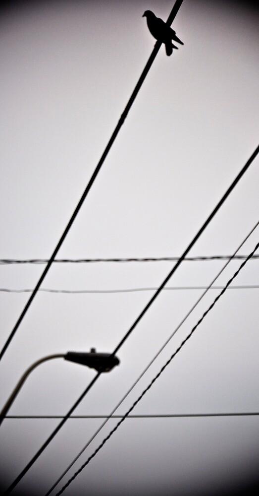 Bird On A Wire by Seannyboy76