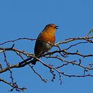 Robin Sings the Blues by Angela Harburn
