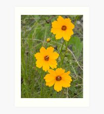 Blooming in a Chill Wind Art Print