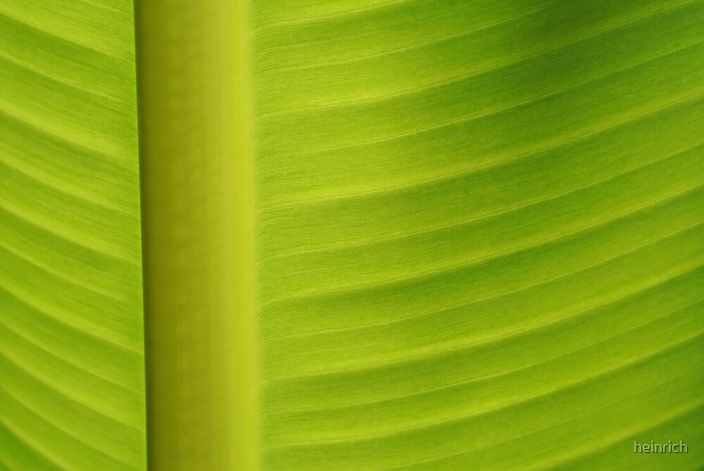 Banana leaf by heinrich