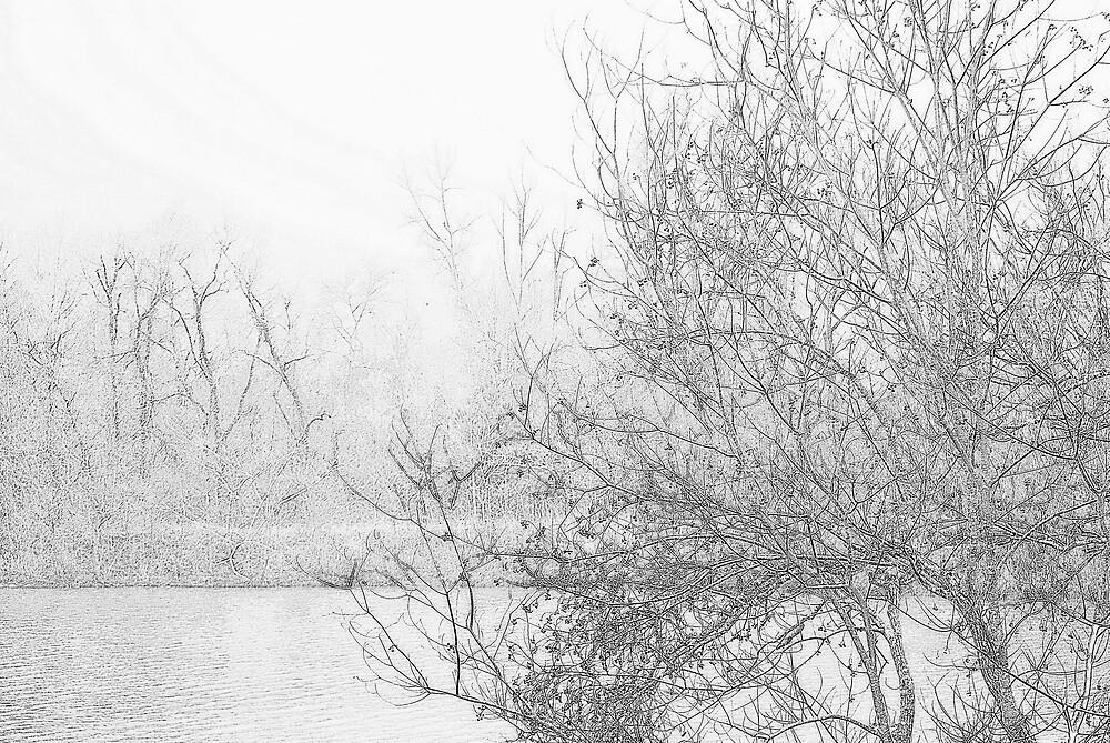Winter in Texas by DottieDees