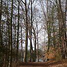 The path around Greenbelt Lake by nealbarnett