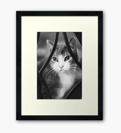 Mittens ~ Framed Print