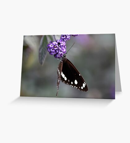 Hunter Valley Butterfly ~ 2 Greeting Card