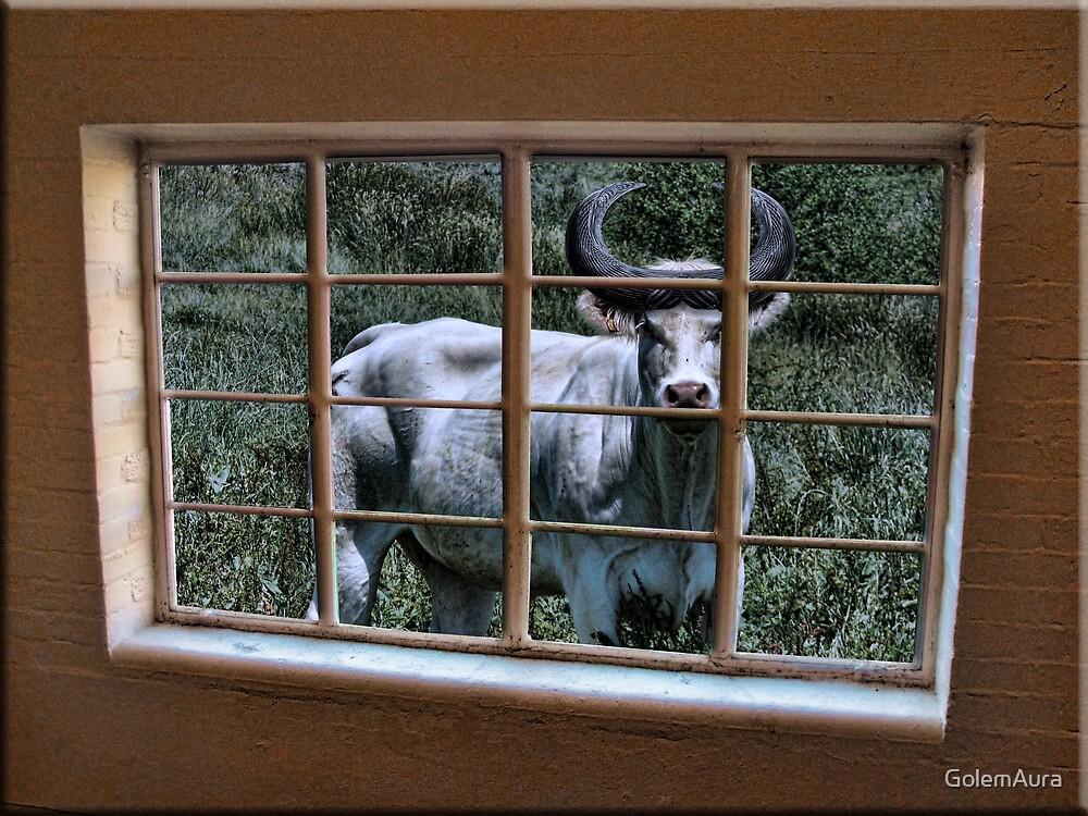 Through the Window at Bar U Ranch by GolemAura