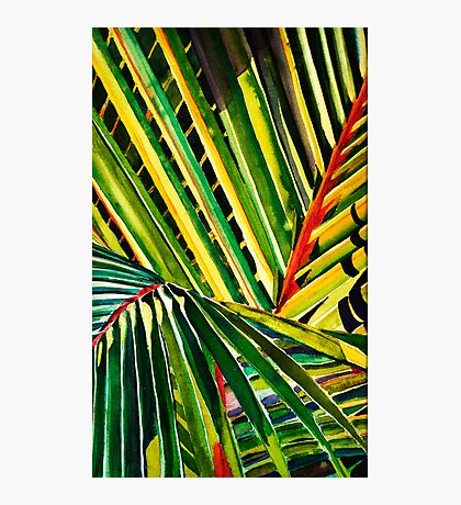 Palm Fronds Photographic Print