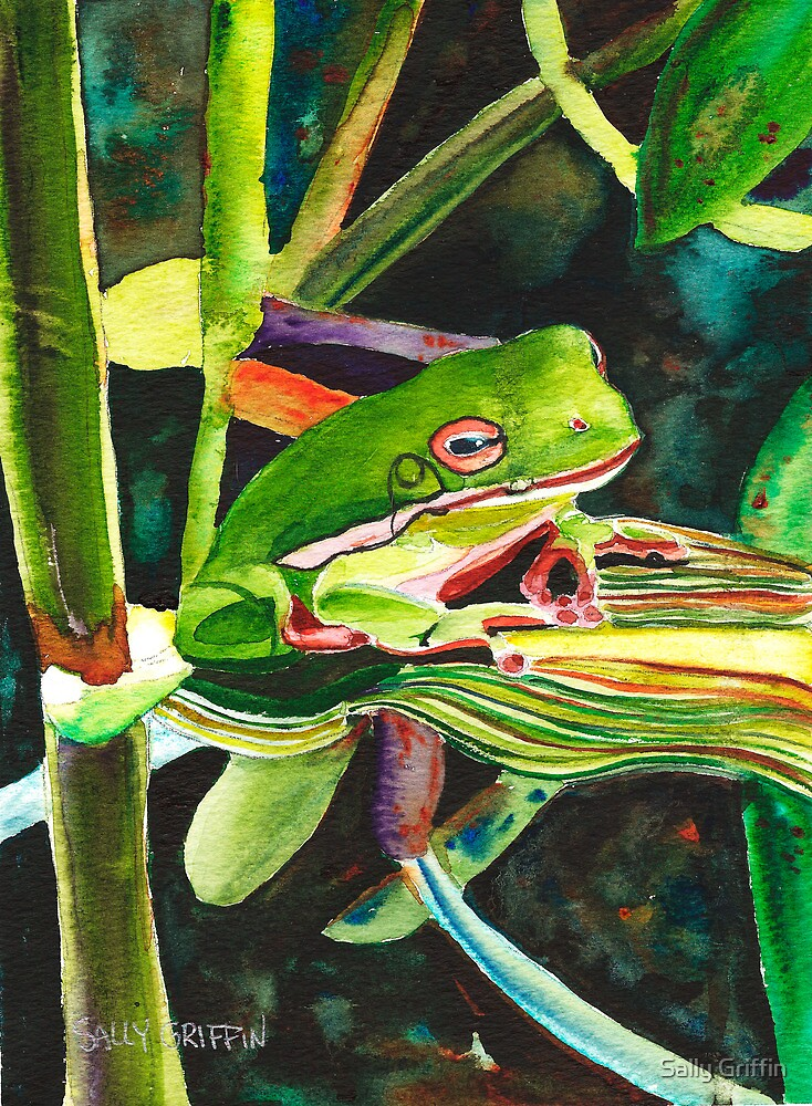Wee Tree Frog by Sally Griffin
