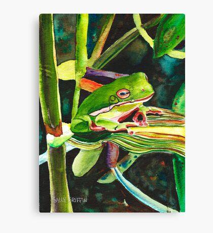 Wee Tree Frog Canvas Print