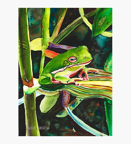 Wee Tree Frog Photographic Print