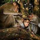 Three monkeys! by vasu