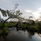 Scenic falls in Kerala! by vasu