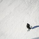 Skiing Fun by NinaJoan