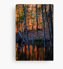 Last Light of the Day Falling on a Beaver Pond Canvas Print