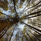 Trees by willgudgeon