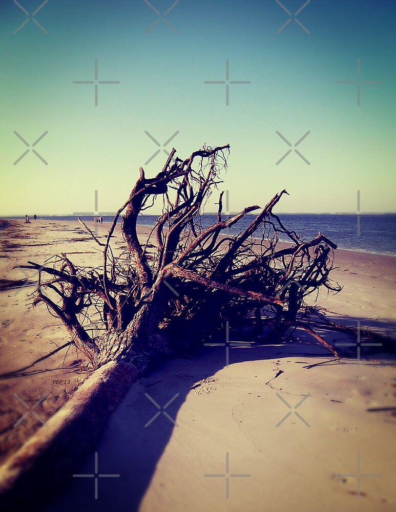 Uprooted Tree On The Beach by Phil Perkins