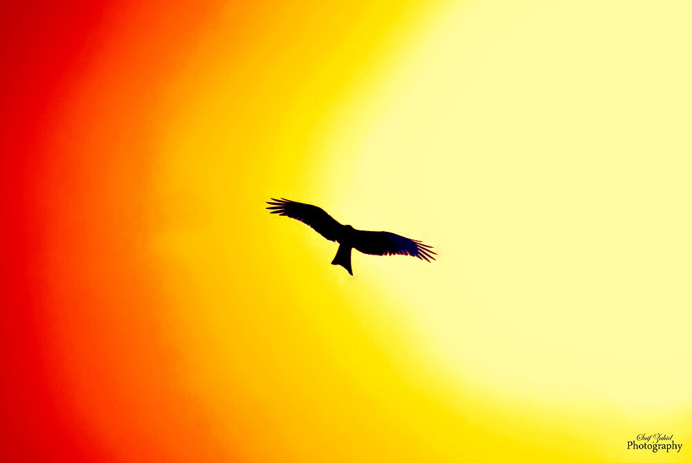 A Hot Day.. by Saif Zahid