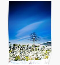 Tree and mossy wall in the snow, Southern Upland Way, Scottish Borders Poster