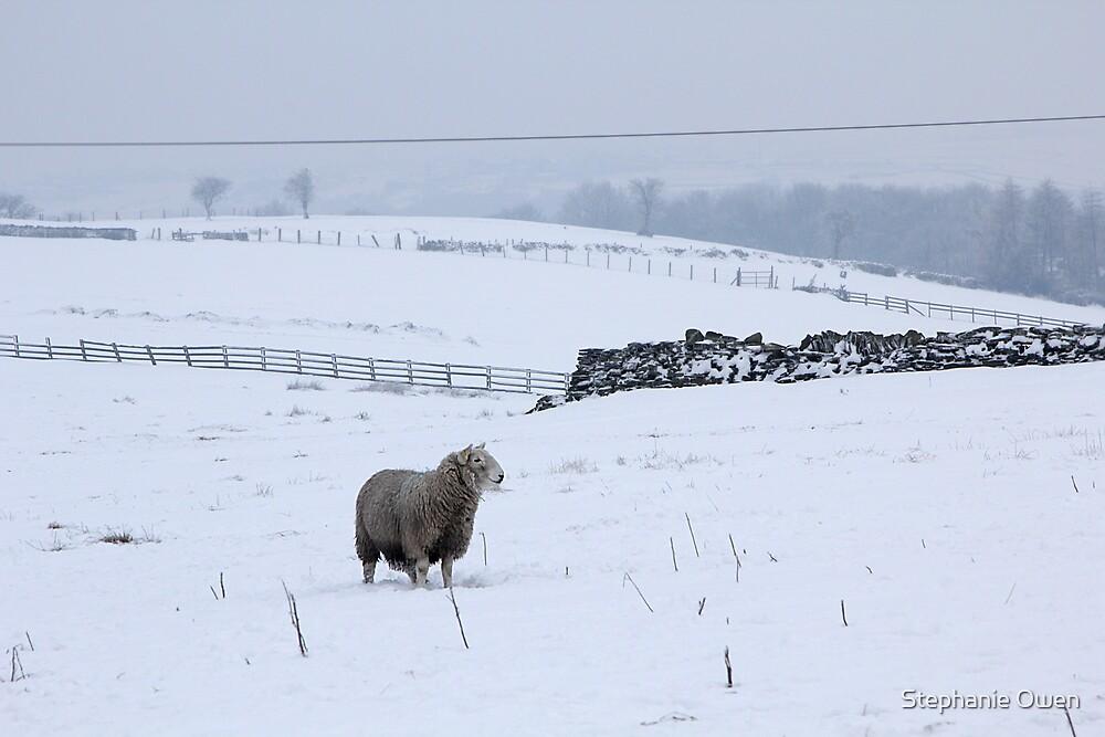 Wintery Pennines by Stephanie Owen